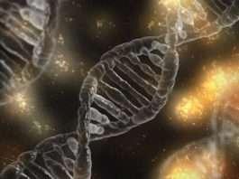 Medical Cannabis Genetics